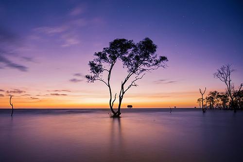 """""""Gốc cây cô đơn"""" giữa biển Tân Thành"""