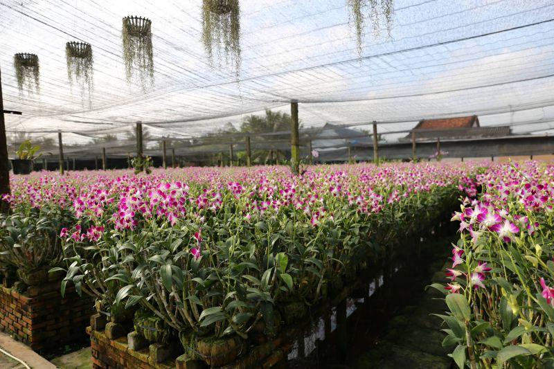 Vương quốc hoa Lan tại Điền Lan Thôn Trang
