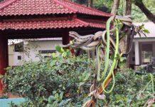 Khu du lịch Trại rắn Đồng Tâm - Top 10 điểm đến hấp dẫn nhất Tiền Giang
