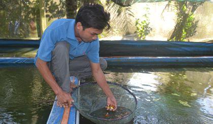 Nhờ nghề nuôi cá kiểng mà nhiều hộ nông dân xã Mỹ Hội, huyện Cái Bè, tỉnh Tiền Giang trở nên giàu có.