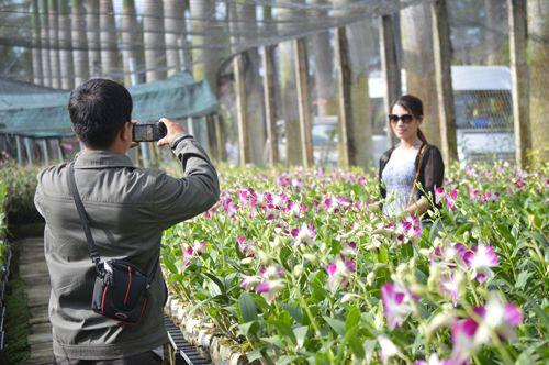 Tham quan và chụp ảnh với hoa phong lan tại Điền Lan Thôn Trang -Photo: Sưu tầm