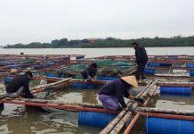 Tiền Giang: Gia cố các bè nuôi cá ứng phó bão Tembin. Ảnh: Dân Trí