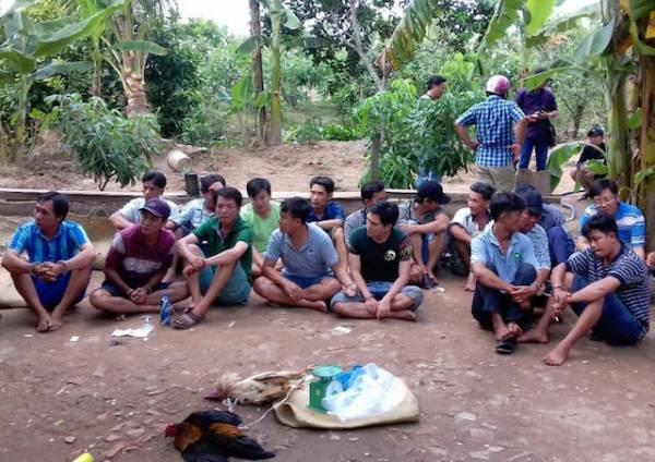Cảnh sát liên tiếp triệt phá hàng loạt trường gà ở Chợ Gạo - Tiền Giang