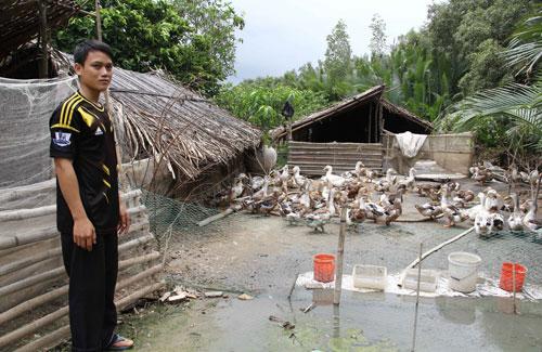 Mô hình nuôi vịt biển khó nhân rộng ở tỉnh Trà Vinh, nhưng lại được nông dân tỉnh Tiền Giang phát triển tốt thành đặc sản. Ảnh: Huỳnh Xây