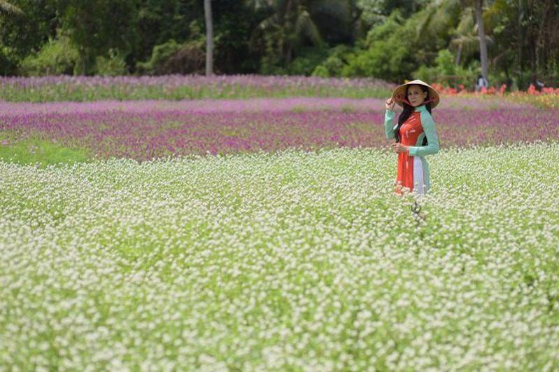 Hoa Bách Nhật – Vườn hoa Mãn Đình Hồng