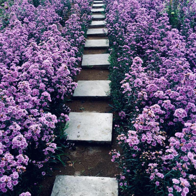 Hoa Thạch Thảo có vẻ đẹp giản dị, nhẹ nhàng, sâu lắng, loài hoa luôn luôn cho ta cái cảm giác buồn man mác