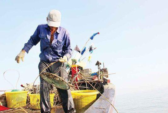 Về Gò Công, theo tàu săn đặc sản ốc cà na trên biển