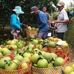 Tiền Giang đề ra 7 nhóm giải pháp phát triển kinh tế xã hội bền vững