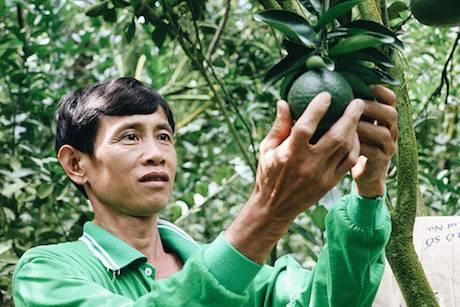 Về Tiền Giang, ghé thăm vương quốc trái cây Cái Bè