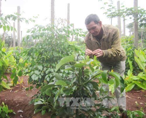 Tiền Giang chuyển đổi đất trồng lúa sang các mô hình đa canh. Ảnh minh họa: TTXVN