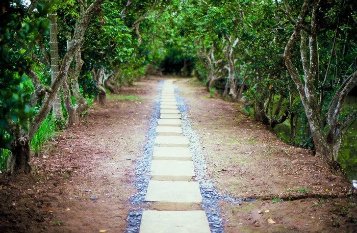 Con đường rợp bóng cây xanh dẫn vào vườn Tiền Giang