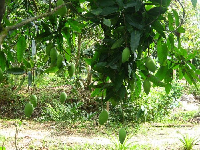 Tiền Giang - Nơi đã có những trái ngọt lủng lẳng trên cây