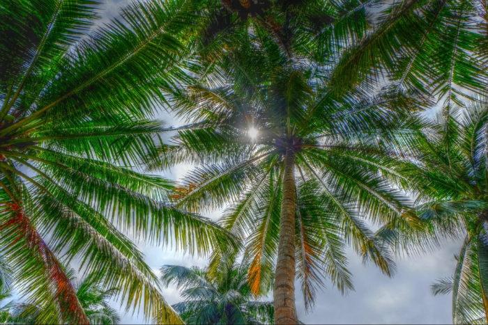 Cù lao Thới Sơn-Dưới bóng dừa trong những nắng ở Đồng bằng Sông Cửu Long
