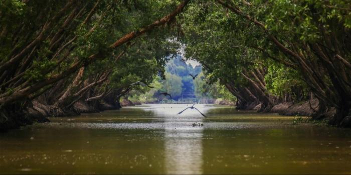 Cù lao Thới Sơn-Mênh mông một vùng sông nước đặc trưng miền Tây Nam Bộ, Việt Nam