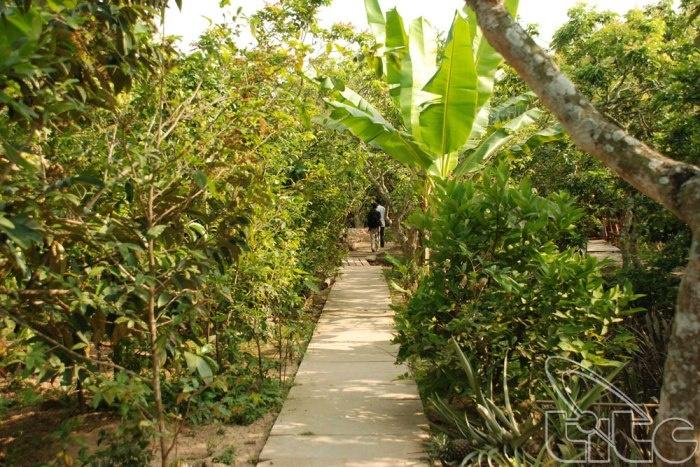 vườn trái cây cái bè