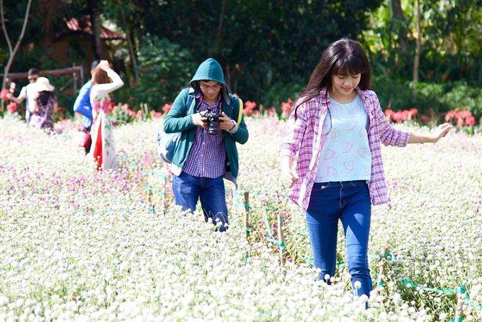 Vườn hoa Mãn Đình Hồng nằm ở ấp Phước Thuận, xã Phước Thạnh, TP Mỹ Tho, tỉnh Tiền Giang, đi vào hoạt động năm 2013. Chị Nguyễn Phương Dung, chủ vườn cho hay, nơi này được tạo nên dựa trên nguồn cảm hứng từ các vườn hoa nước ngoài mà một lần tình cờ chị xem qua. Ảnh: Huong Le.
