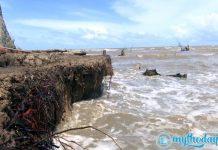Nhiều diện tích rừng phòng hộ ở Tiền Giang mất trắng do xâm thực mạnh
