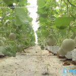 Nông nghiệp Tiền Giang chuyển mình bằng đầu tư công nghệ cao