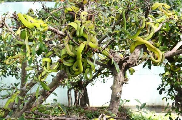 Trại rắn Đồng Tâm được xem là một trong những trại nuôi rắn lớn nhất Việt Nam. Ảnh: ST