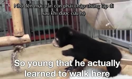 Một cá thể gấu được cứu hộ trước đó