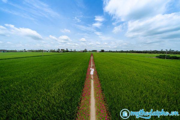 Con đường hoa mười giờ Gò Công - Tiền Giang