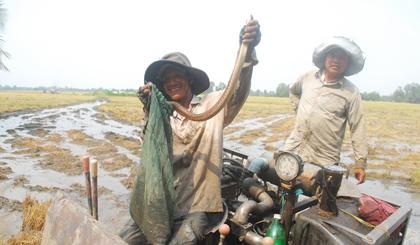 Con rắn, con chuột là những chiến lợi phẩm mà người dân thường thu được trong vụ mùa này.