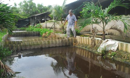 Nhiều trang trại  nuôi heo lớn được đầu tư hệ thống xử lý nước thải sau biogas khá hoàn chỉnh nên giải quyết được tình trạng ô nhiễm môi trường nước.