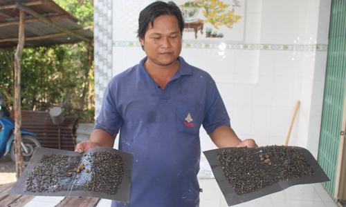 Người dân sống gần trại gà cầm trên tay 2 miếng keo dính đầy ruồi, nhặng.