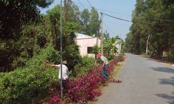 Người dân ấp 6 đang trồng hoa dọc theo lề đường.