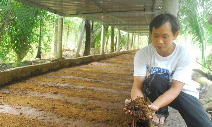 Mô hình nuôi trùn quế bằng phân bò của anh Vinh mang lại hiệu quả khá cao.