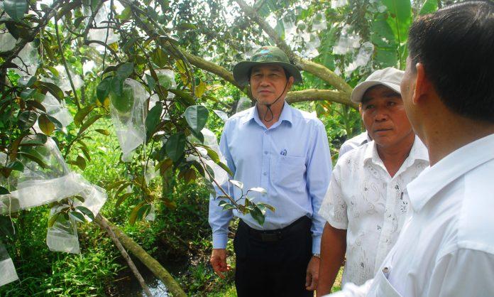 Đồng chí Lê Văn Hưởng cùng ngành chức năng đặc biệt quan tâm đến công tác trồng và xuất khẩu vú sữa của tỉnh.