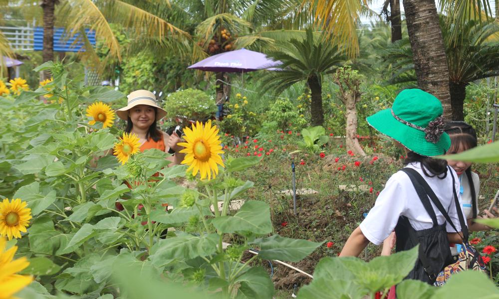 Còn tại vườn hoa Thạch Thảo (xã Phước Thạnh, TP. Mỹ Tho), năm nay, nhà vườn đã đầu tư thêm nhiều hạng mục như: Hồ cá koi, hồ đá, khu vui chơi cho trẻ em… để phục vụ nhu cầu đa dạng của du khách.