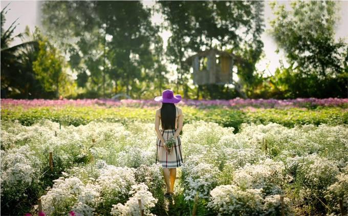 Vườn hoa đủ màu sắc ở miền Tây làm say lòng du khách
