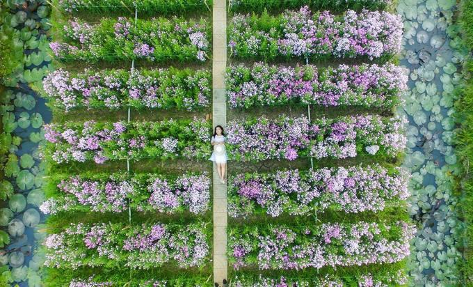 Vườn hoa đẹp nhất Tiền Giang - Mãn Đình Hồng chính thức mở cửa dịp Tết 2019