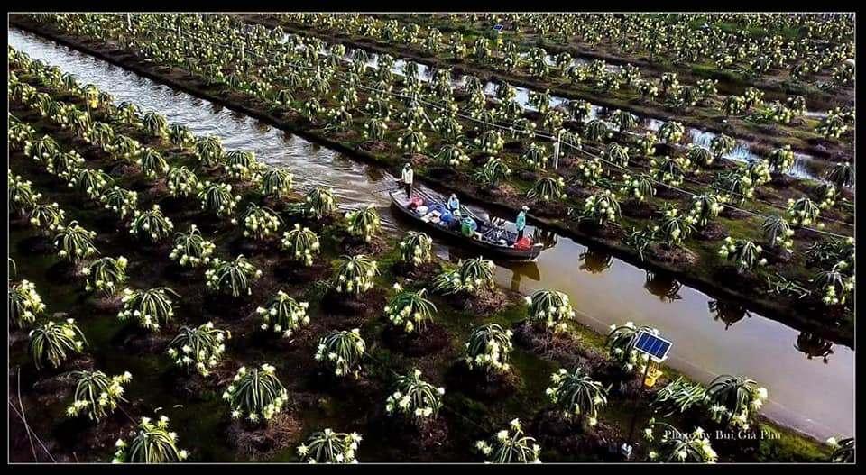Tiền Giang trở thành một trong những tỉnh thu hút nhiều nhà đầu tư nhất khu vực