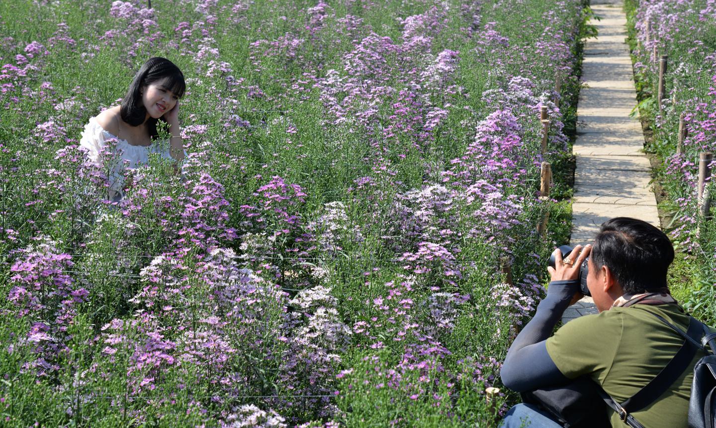 Du khách tìm đến vườn hoa Mãn Đình Hồng để chụp ảnh  trong dịp tết.