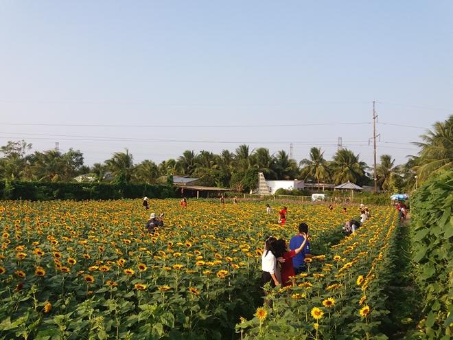 Vườn hoa tuyệt đẹp nở dịp Tết chờ giới trẻ đến check in ở Tiền Giang
