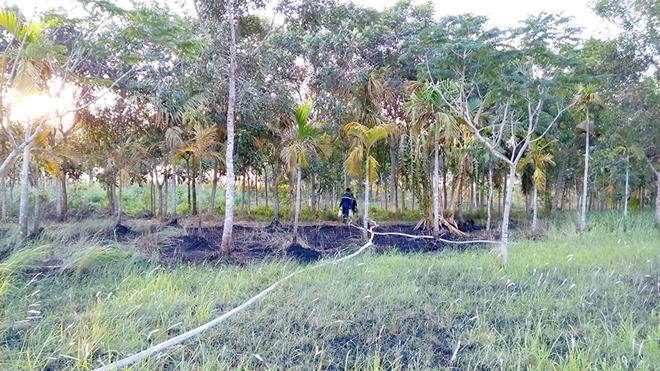 Tiền Giang: Kịp thời dập tắt đám cháy ở Khu công nghiệp Long Giang