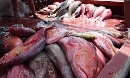 Tàu cá cứu 22 ngư dân Philippines đã cập cảng Tiền Giang