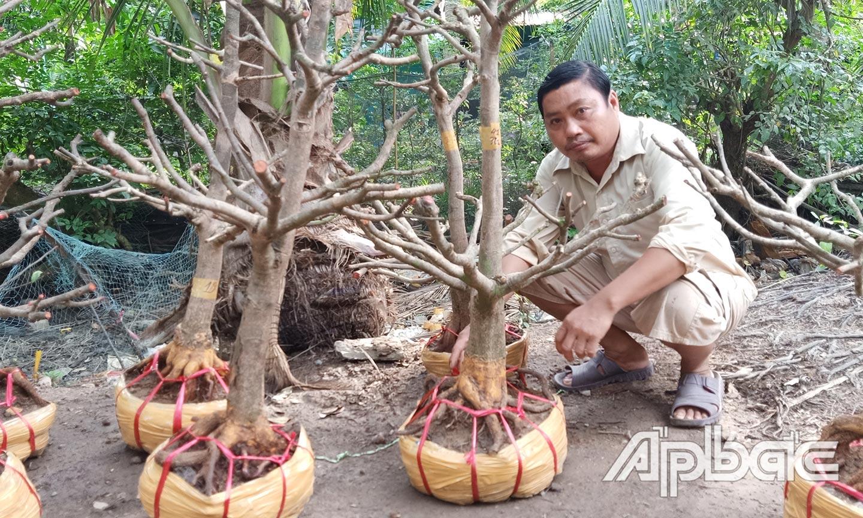 Anh Lê Văn Mười  (ấp Hòa Thới) bên những phôi mai vàng chuẩn bị xuất bán cho khách hàng.