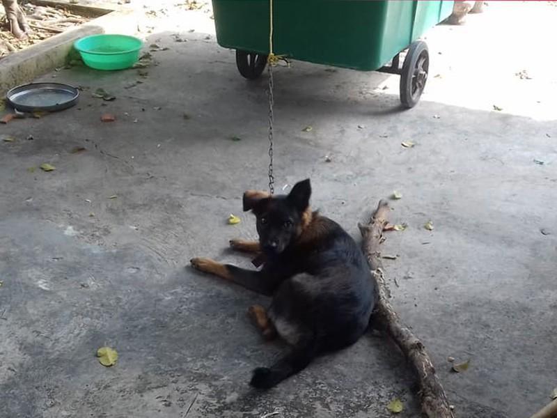 Con chó mà hai nhà tranh chấp đang được Công an xã Bình Nhì nuôi nhốt tại trụ sở. Ảnh: đh